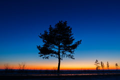 Tree against the sky with sunset. Stock Photography
