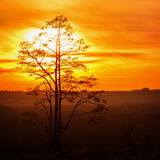 tree against the sky with sunset Stock Images