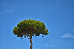 A tree against the sky. Stock Image
