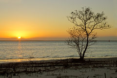 Tree against sunset. Silhouette of a mangrove tree against a sunset over coastal water, Mozambique, southern Africa Stock Photos