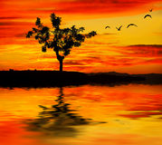 The tree against the sunset Royalty Free Stock Image