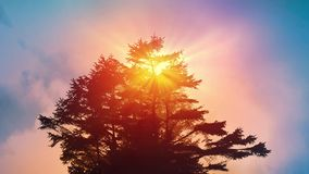 Tree Against Vibrant Morning Sky. Big Tree catches the sunlight and rays of light glow through it stock video footage
