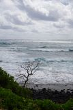 Tree Against Waves Royalty Free Stock Photos