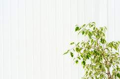 Tree against a window and a jalousie Royalty Free Stock Images