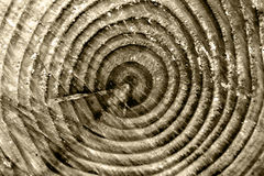 Tree age rings Royalty Free Stock Image