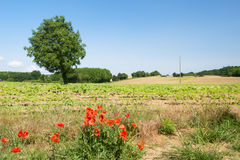 Tree in agricultural landscape Stock Photo