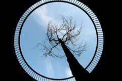 Tree aiming towards the sky. Through a round platform Royalty Free Stock Photography