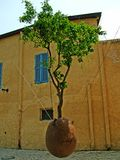 The tree in the air on old square of Jaffa. Tree growing in plant pot suspended in mid-air in the Old City of  Jaffa , Israel Stock Image