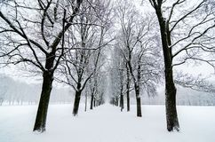Tree alignment in Vigeland Park in Oslo. Snow covered. Inspiration design Stock Photo