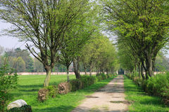 Tree alley Royalty Free Stock Images