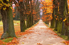 Tree Alley And Path Stock Images