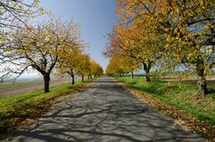 Tree alley in autumn, South Moravia. A romantic picture of tree alley in autumn time, South Moravia, Czech Republic Royalty Free Stock Images