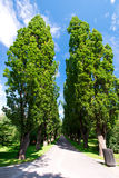 Tree alley Royalty Free Stock Photo