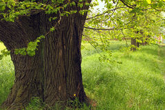 Tree in the alley. Big tree in the alley Royalty Free Stock Photography