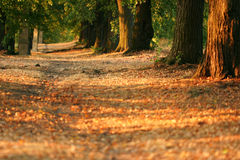 Tree alley at early evening Royalty Free Stock Images