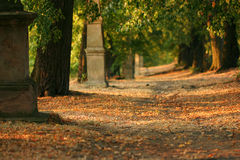 Tree alley at early evening Stock Images