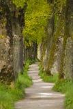 Tree alley Stock Image