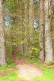Tree alley  footpath Stock Photo