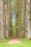 Tree alley  footpath Royalty Free Stock Image