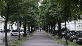 Tree alley. An alley with green deciduous trees Royalty Free Stock Images