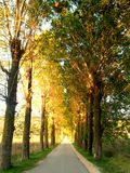 Tree alley Stock Photography