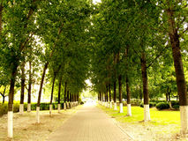 Tree alley Royalty Free Stock Photos