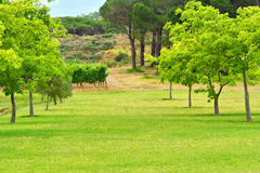 Tree alley on lawn Stock Photography