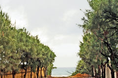 A tree alley leading to the beach. Royalty Free Stock Image