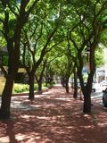 Tree Alley royalty free stock photography