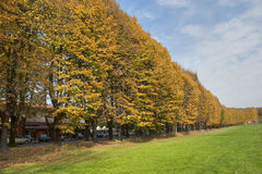 Tree Alley in Lucca. Italy Stock Image