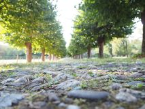 Tree Alley with a path. Green trees along a path in Germany, Cologne stock photos