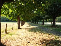 Tree Alley with a path. Green trees along a path in Germany, Cologne royalty free stock photos