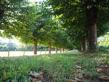 Tree Alley with a path. Green trees along a path in Germany, Cologne stock photo
