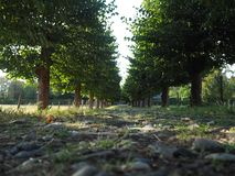 Tree Alley with a path. Green trees along a path in Germany, Cologne royalty free stock photo