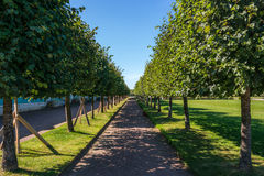 Tree alley in Peterhof. Tree Alley in the Western Part of The Lower Park in the Peterhof State Museum Preserve Stock Photo
