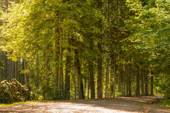 Tree alley and stone wall Royalty Free Stock Photo