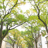 Tree alley in street Royalty Free Stock Photography