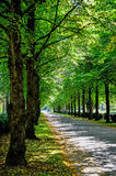 Tree alley in summer Stock Image