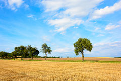Tree alley surrounded by fields Stock Photo