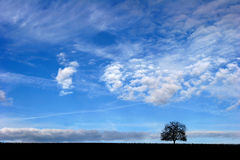 Tree alone Royalty Free Stock Image