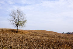 Tree alone Stock Photos