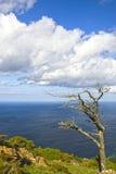 Tree alone at the coast Royalty Free Stock Photo