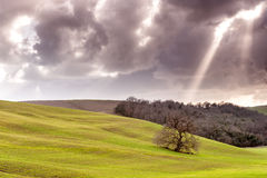 Tree alone in the country field. With spotlight Royalty Free Stock Photo
