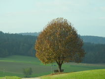 The tree alone Royalty Free Stock Photo