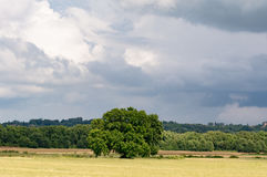 A tree alone in a field Royalty Free Stock Images