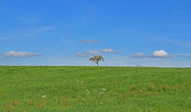 Tree alone on field. Lonely tree on the field Royalty Free Stock Photography