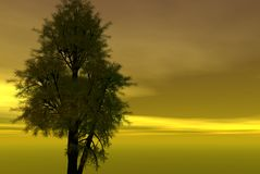 Tree alone and golden sky. Royalty Free Stock Photography