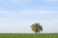 Tree alone with large sky horizontal Royalty Free Stock Photo