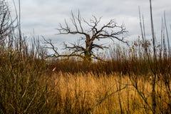 Tree alone stock image