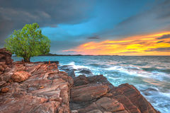 Tree alone on the rock border the sea Royalty Free Stock Photo